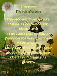 Fairy Plants - Thisledown