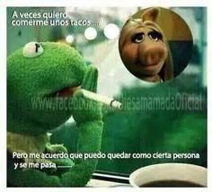 71 Mejores Imagenes De Rana Rene Rana Rene Memes De La Rana