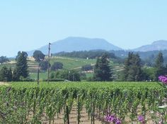 Frog's Leap Winery: Gorgeous grounds with organic fruits & veggies