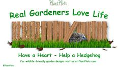 Have a CD sized holes in your fences and hedgehogs will happily wander up your garden path and eat all your slugs! So much easier and less poisonous than slug pellets. PlantPlots.com - Big ideas for small gardens Garden Borders, Garden Paths, Garden Tools, Path Design, Garden Design, Small Stuff, Slug, Hedgehogs, Small Gardens