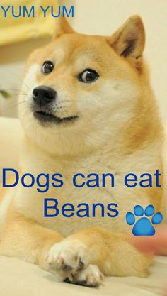Homemade grain free dog food, Free dog bean recipes, dog can eat cooked beans bulldogvitamins. Home Cooked Dog Food, Make Dog Food, Best Homemade Dog Food, Homemade Dog Treats, Pet Treats, Can Dogs Eat Tomatoes, Homemade Beans, Grain Free Dog Food, Dog Food Brands