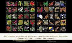- Australian Alphabets by Lynette Weir - The process of developing my Australian Wildflower & Wildlife Alphabets Australian Wildlife, Australian Art, Linocut Artists, Australian Wildflowers, Small Words, Wal, Wildlife Art, Art Studios, Red Flowers