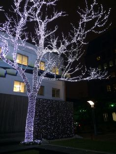 겨울 단장한 회사앞 나무~