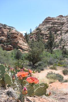 Zion Canyon - Utha - USA - Work and Travel Kanada - http://workandtravelkanada.com