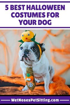 Best Halloween Costumes for Your Dog - Ideas from Wet Noses Pet Sitting Puppy Halloween Costumes, Pet Costumes, Dog Halloween, Cute Puppies, Cute Dogs, Dog Boarding Near Me, Cat Sitter, Dog Care, Fur Babies