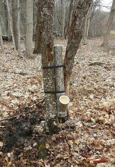1000 images about deer feeders on pinterest pvc deer for Homemade deer feeders pvc pipe