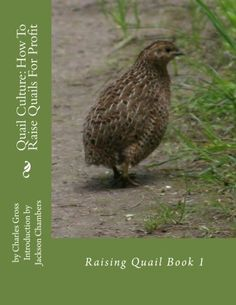 Find out all the reasons why we've decided to raise this wonderful variety of quail on our homestead.