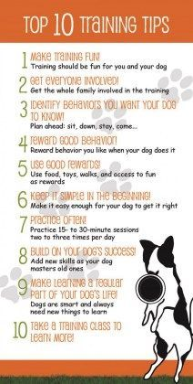 Dog Obedience Training Top 10 Training Tips! You were recommended to us by friends at the Fernhill Dog Park. Our old female boxer Moxie is a great dog who we took had two puppy kindergarten classes as a puppy. Puppy Training Tips, Training Your Dog, Training Videos, Training Online, Potty Training, Service Dog Training, Training Classes, Dog Obedience Training, Dog Commands Training