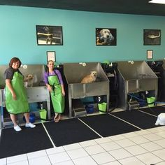 Repinned self service dog wash tub stalls at the dashing pooch self serve dog wash google search bark bath dog wash groomersbest solutioingenieria Image collections