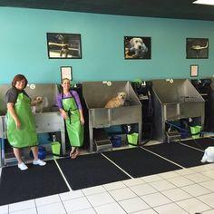 Heres some advice on how to start a self serve dog washing business self serve dog wash google search bark bath dog wash groomersbest solutioingenieria Choice Image