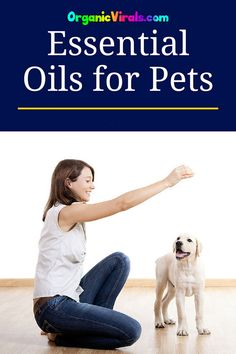 Avoid Another Expensive Vet Bill, Try Essential Oils Instead - We all love our pets and who can resist a puppy with big floppy ears? Those ears, however, can be a breeding ground for ear infections and irritations. #essentialoils #pets #pethealth #veterinarian