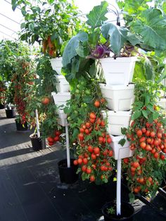 Growers are finding that growing produce vertically saves space, time and money.
