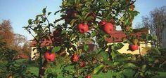 Make Natural Bug Repellent for Fruit Trees
