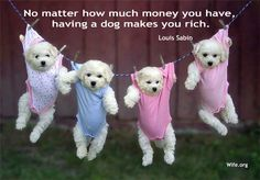 If a dog makes you rich, what do four adorable puppies make you?