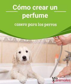 Cómo crear un perfume casero para los perros - Mis animales ¿Has notado cómo corre como un loco tu perro cada vez que después de bañarlo le pones perfume casero? Esto sucede por la cantidad de químicos que estos llevan.