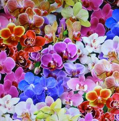 Digital Orchids~Exquisite Qrchids~Cotton Fabric,~ Floral~Elizabeth's Studio~Fast Shipping F602