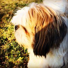 My lovely dog...Carlo!