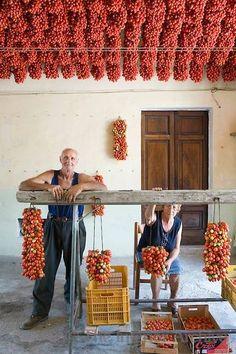 It's tomato season! Farmer Ponsiello Giovanni and his wife Maria Aprea preparing pomodorino piennolo del Vesuvio for the winter season in their home. Naples, Tomato Season, Winter Season, Sicily, Wine Tasting, Wine Recipes, Italian Recipes, Beautiful, Italian Lifestyle