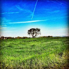 VENDIMI L'ANIMA - Blog di una (ex) commessa  frustrata: L'albero Verde