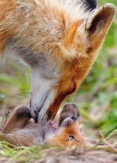 Moderskärlek.