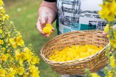 Wicker Baskets, Vegetables, Garden, Plants, Garten, Lawn And Garden, Vegetable Recipes, Gardens, Plant