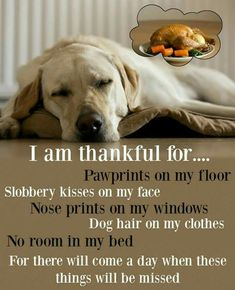 I love my dog sooo much and he is an 8 year old golden retriever. Comment if you want to see a picture of him. I Love Dogs, Cute Dogs, Funny Dogs, Adorable Puppies, Animals And Pets, Cute Animals, Funny Animals, Animal Quotes, Puppy Quotes