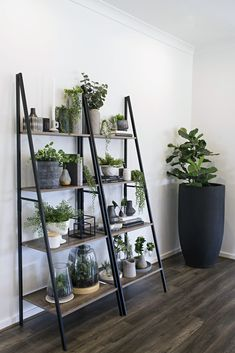 How to Create an Indoor Vertical Garden On-the-Cheap How to Create an Indoor Vertical Garden On-the-Cheap,H.E kmart industrial ladder shelf indoor vertical garden ideas Related posts:TriBeCa Trio Topf Regal / hängende Regale / Pflanzer. Interior Design Inspiration, Home Decor Inspiration, Design Ideas, Interior Ideas, Living Room Inspiration, Interior Styling, Diy Design, Interior Design Living Room, Living Room Designs