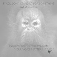 Inspiring quotes, support palm oil free products and make yourself heard. Destruction of the rainforests in Borneo has got to stop to save this species. We are the reason, now lets be the answer. Orangutans, Rainforests, Palm Oil, Free Products, Borneo, Western Australia, Photographic Prints, Destruction, Wildlife Photography