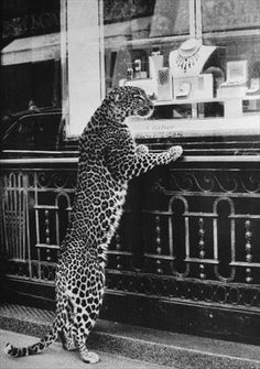 From a sleek leopard peering through a Cartier window to Naomi Campbell striking a fierce feline pose, cats have had a longstanding relationship with the world of fashion and advertising. AnOther considers the animal's enduring appeal. Black And White Photo Wall, Black And White Photography, Big Cats, Cats And Kittens, Cartier Panthere, Black And White Aesthetic, Tier Fotos, Leopards, Belle Photo