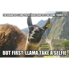Funny pictures about Photogenic Llama. Oh, and cool pics about Photogenic Llama. Also, Photogenic Llama photos. Awkward Animals, Funny Animals, Cute Animals, Animal Funnies, Animal Puns, Yarn Animals, Alpacas, Stefan Raab, Funny Llama