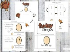 FREE Life Cycle of a Turkey Worksheet Pack