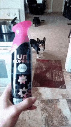 Reverse fetch! https://gfycat.com/FirsthandLawfulKilldeer