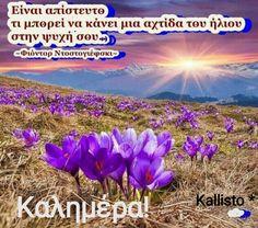 Good Morning, Plants, Buen Dia, Bonjour, Plant, Good Morning Wishes, Planets