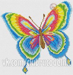 Farfalla multicolor 1