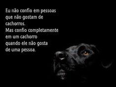 Eu não confio em pessoas que não gostam de animais... #salve #proteja #animais