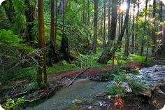 Limekiln Trails - A series of 3 connected trails that sum up to 3 miles in length.  This trail has some of the oldest and largest Redwoods in the area.  Also see a waterfall and some giant kilns that were used to process lime.