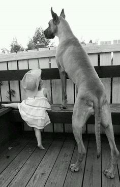 WOW, what an awesome dog! The little girl isn't taken back by his size at all! :-)