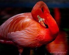 Flamingo by  DJ Pettitt