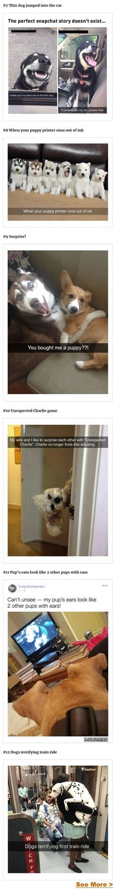 """""""Charlie no longer finds this amusing. Funny Dog Memes, Funny Animal Memes, Funny Animal Pictures, Cute Funny Animals, Funny Cute, Funny Dogs, Cute Pictures, Hilarious Quotes, Pet Memes"""