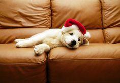 Santa's little helper :)