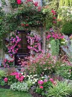 Beautiful climbing flowers on a cottage.