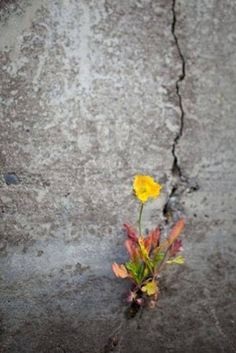"""""""I like it when a flower or a little tuft of grass grows through a crack in the concrete. It's so fuckin' heroic.""""  ― George Carlin"""