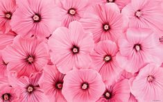 flower pictures -