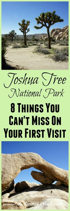 Explore Joshua Tree National Park with a former park ranger.  You'll love this list of hikes and activities you can't miss!