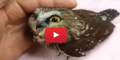 True facts about Owls.  Need a laugh?  Watch this video.