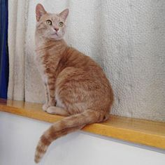 2513-Tiki (Mâle, né le 31 juillet 2009 / Male, born July 31, 2009). #adoptable #cat #chat #montreal