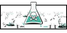 como usar el acido borico para matar insectos