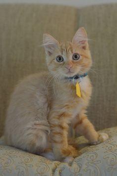 Favorite cat!