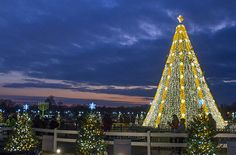 National Christmas Tree at dusk | by US Department of State