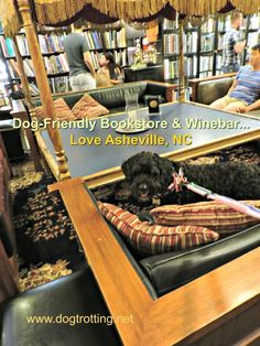 Travel Asheville, NC: Books, Wine and Dogs… what could go wrong? Ashville North Carolina, Ashville Nc, Dog Travel, Travel Usa, Travel Tips, Train Info, Book Bar, Mountain Photography, Landscape Photography